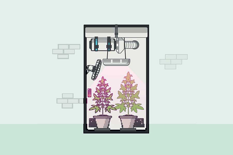 Ventilation Indoor Cannabis
