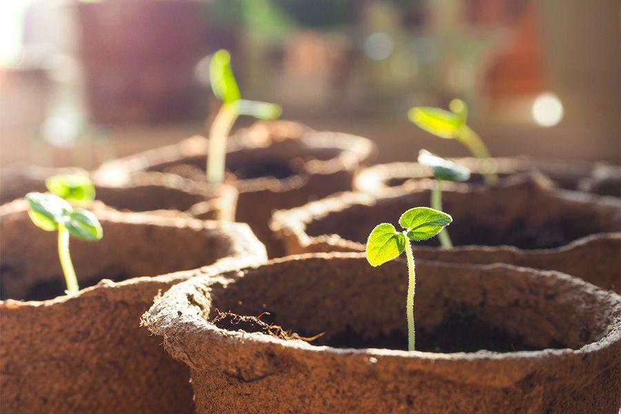 Cannabis plant pots