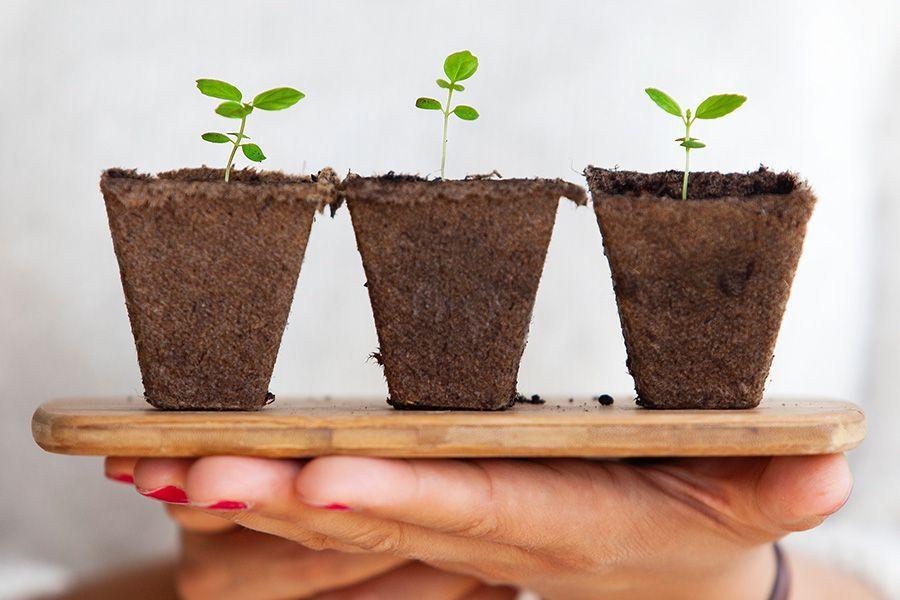 Plant pot for hemp